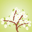 Cherry tree — Stock Vector