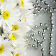 Bouquet daisywheel — Stock Photo