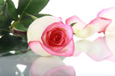Rose and petal on mirror surface — Stock Photo