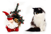 Cat and christmas stuff — Stock Photo