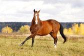 Horse in autumn — Stock Photo