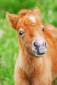 Baby foal — Stock Photo