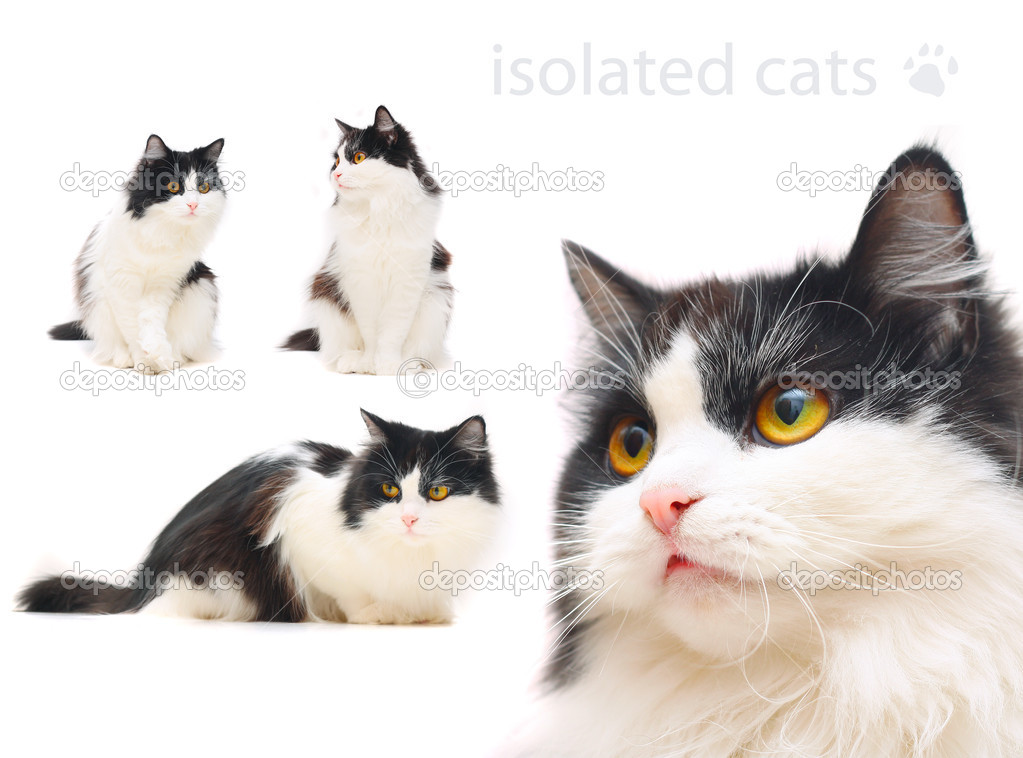 Isolated cat in different poses — Stock Photo #1168433