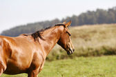 Young horse on field — Stock Photo