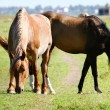 Draft horses — Stockfoto #1201017