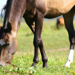 Horse grazing on field — Stock Photo #1201047