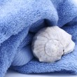 Towel and a seashell — Stock Photo