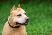 Dog on green background — Stock Photo