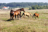 Herd on a hill — Stock Photo