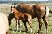 Filly with his mother — Stock Photo