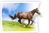Horse card — Stock Photo