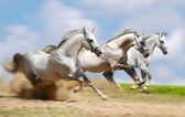 Three stallions — Stock Photo