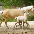 Mare and foal trotting — Stock Photo #1217726