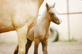 Foal with his mother — Stock Photo