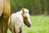 Foal on nature — Stock Photo