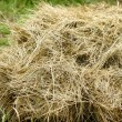 Hay stack — Stock Photo #1232278