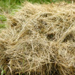 Stock Photo: Hay stack