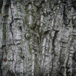 Wooden texture — Stock Photo #1233109