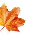 foglia d'autunno isolato — Foto Stock