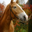 Stock Photo: Horse profile