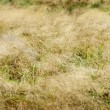 Autumn pasture grass - Stock Photo