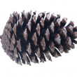 Cone of crimean pine - Foto de Stock  