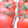 Stock Photo: Tomatoes closeup