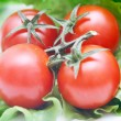 Royalty-Free Stock Photo: Tomatoes closeup