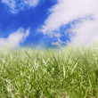 Grass and sky — Foto de stock #1236923