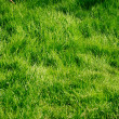 Green grass texture — Stock Photo #1236940