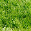 Green grass texture — Stock Photo #1237012