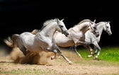 Three stallions on black galloping in du — Stock Photo