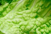 Salad leaf macro — Stock Photo