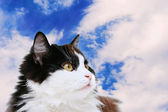 Cat isolated on sky — Stock Photo