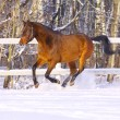 Horse in winter — Stock Photo #2070462