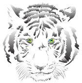 White tiger vector — Stock Photo