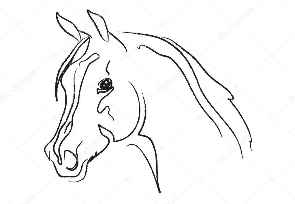Horse Head Vector Horse Head Vector Sketch