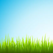 Vector grass and sky — Stock Photo