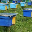 Pined bright wooden bee hives — Stock Photo