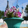 Flowers in russian medieval monastery — Stock Photo #1210351