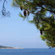Fir twigs,blue sky and sea — Stock Photo