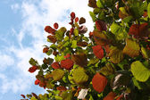 Hazel twigs with pied leafs — Stock Photo