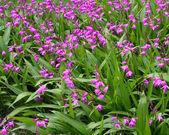 多彩鲜艳的花朵 — 图库照片