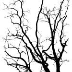 strom větví silueta — Stock vektor