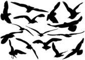 Flying sea-gulls vector illustration — Stock Vector