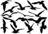 Flying sea-gulls vector illustration — 图库矢量图片