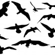 Flying sea-gulls vector illustration - Image vectorielle