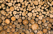 Logs of fire wood — Stock Photo