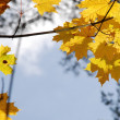 Stock Photo: Mellow autumn