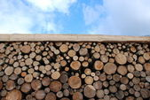 Wooden logs on blue sky — Stockfoto